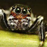 Как избавиться от фобии пауков (6)