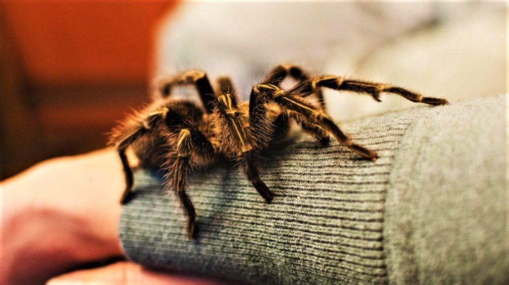 Как избавиться от фобии пауков (1)