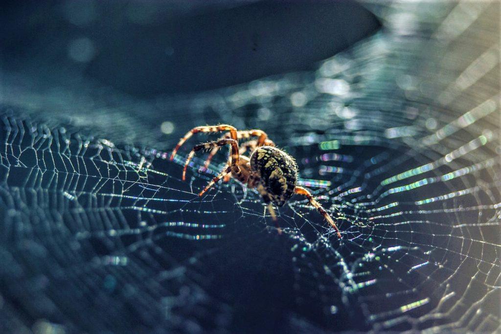 Как избавиться от фобии пауков (2)
