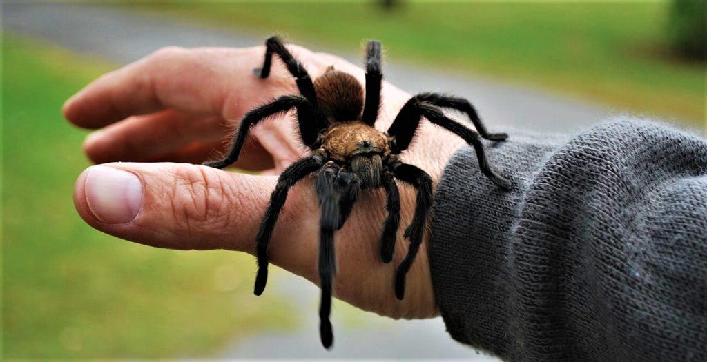 Как избавиться от фобии пауков (4)