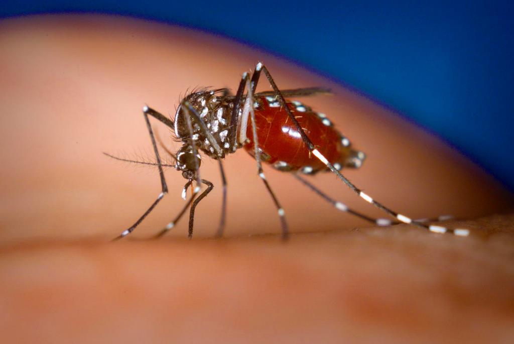 Лихорадка денге причины возникновения