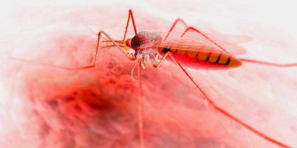 Лихорадка денге диагностика