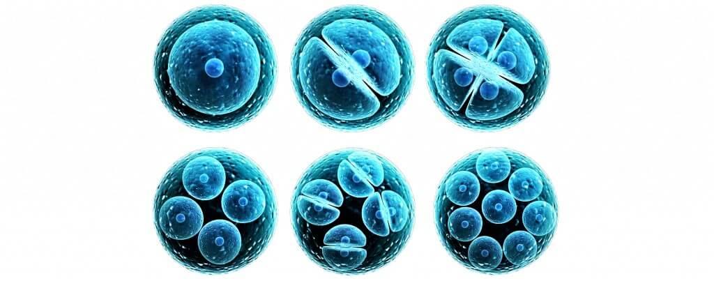 Деление клеток из-за радиации