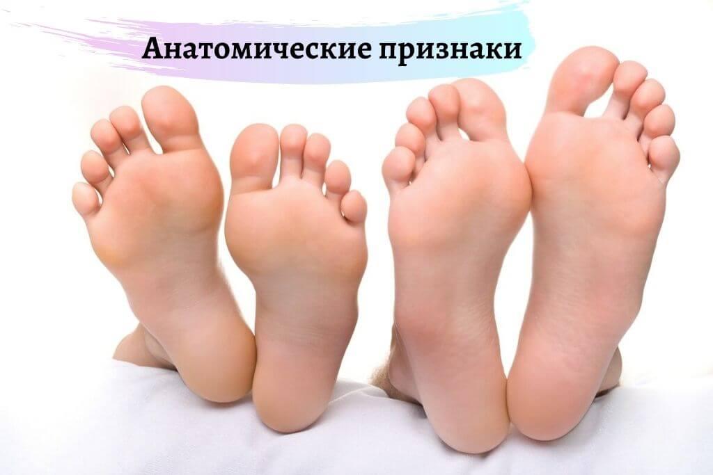 Анатомические признаки боли в пятке