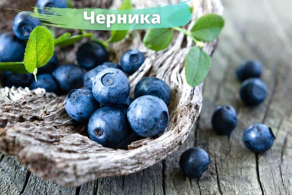 Черника и лесные ягоды от рака