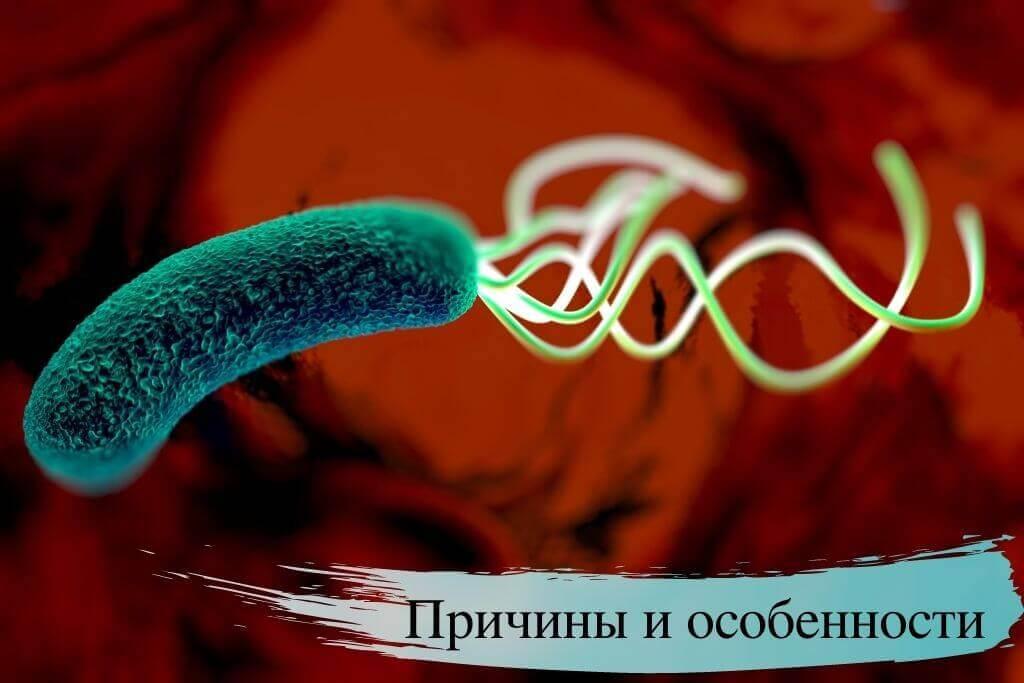 Причины и особенности бактерии Хеликобактер пилори
