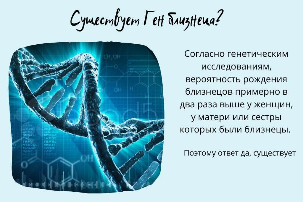 ДНК близнецов ген