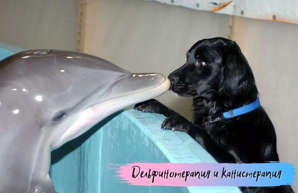 Дельфинотерапия и канистерапия