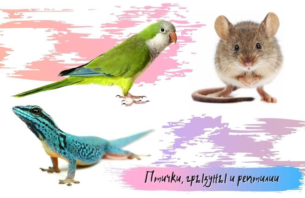 Птички, грызуны и рептилии
